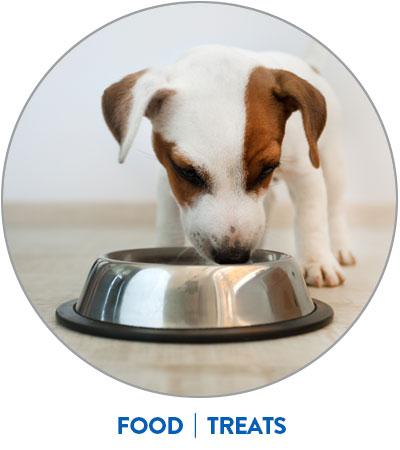 puppy eats