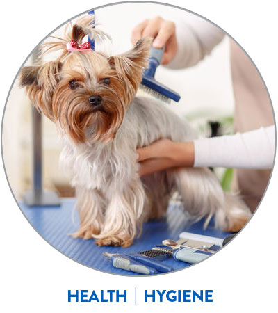 health hygiene